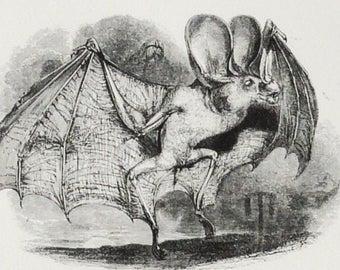 Excerpts on Bulgarian Vampire FolkloreBelief